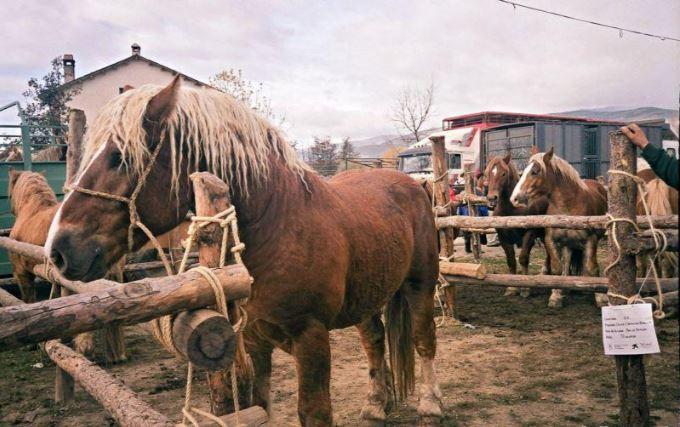 cavall de la fira del cavall de puigcerda